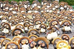 many tanuki