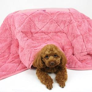 pet kotatsu