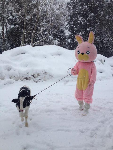 cow with Usahi