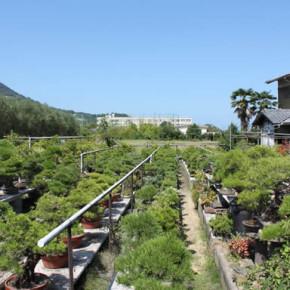 bonsai farm