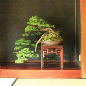 bonsai in JP room_cut